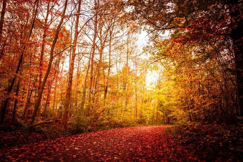 Hd Wallpaper Fall Leaf Change Beautiful Autumn Landscape In Warm Stock Photo