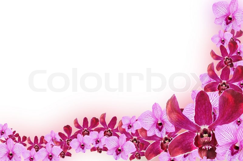 Purple Orchid flowers - border design Stock Photo Colourbox