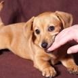 puppy biting someones hand