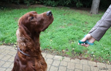 woman  using clicker with dog
