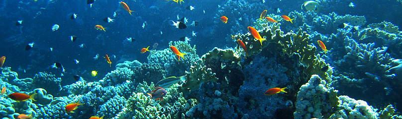 Oceans WWF