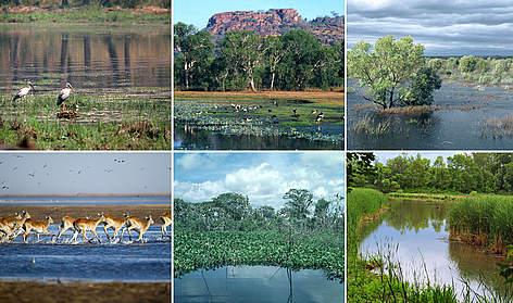 Types of wetlands WWF