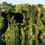 topo_amazon_flooded Tropical Rainforests Green Plants On The Earth