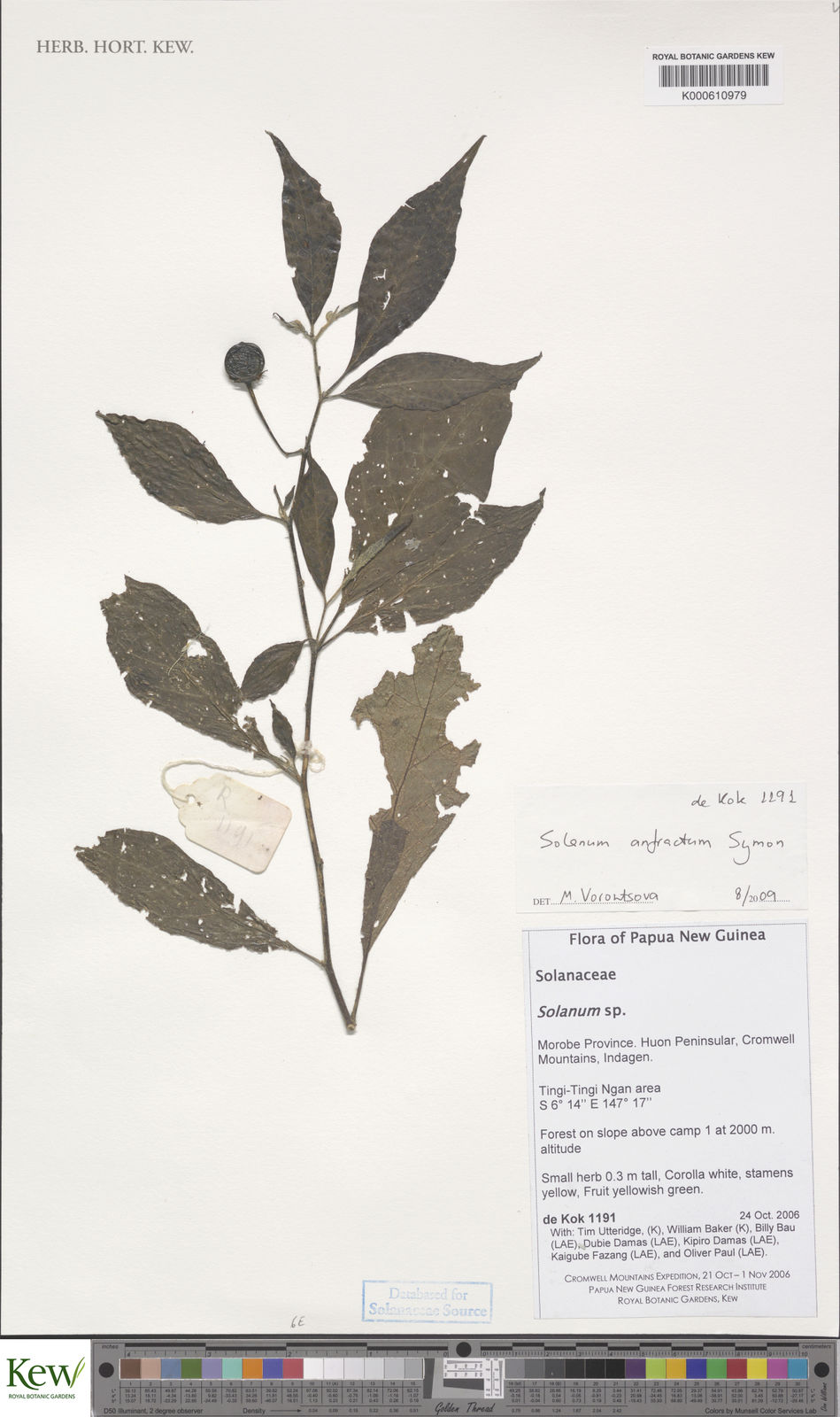 Tim Colore Solanum Anfractum Symon Plants Of The World Online Kew Science