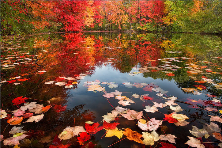 Maple Leaf Wallpaper For Fall Season Leaves Light Amp Land Are Beautiful Now Beautifulnow