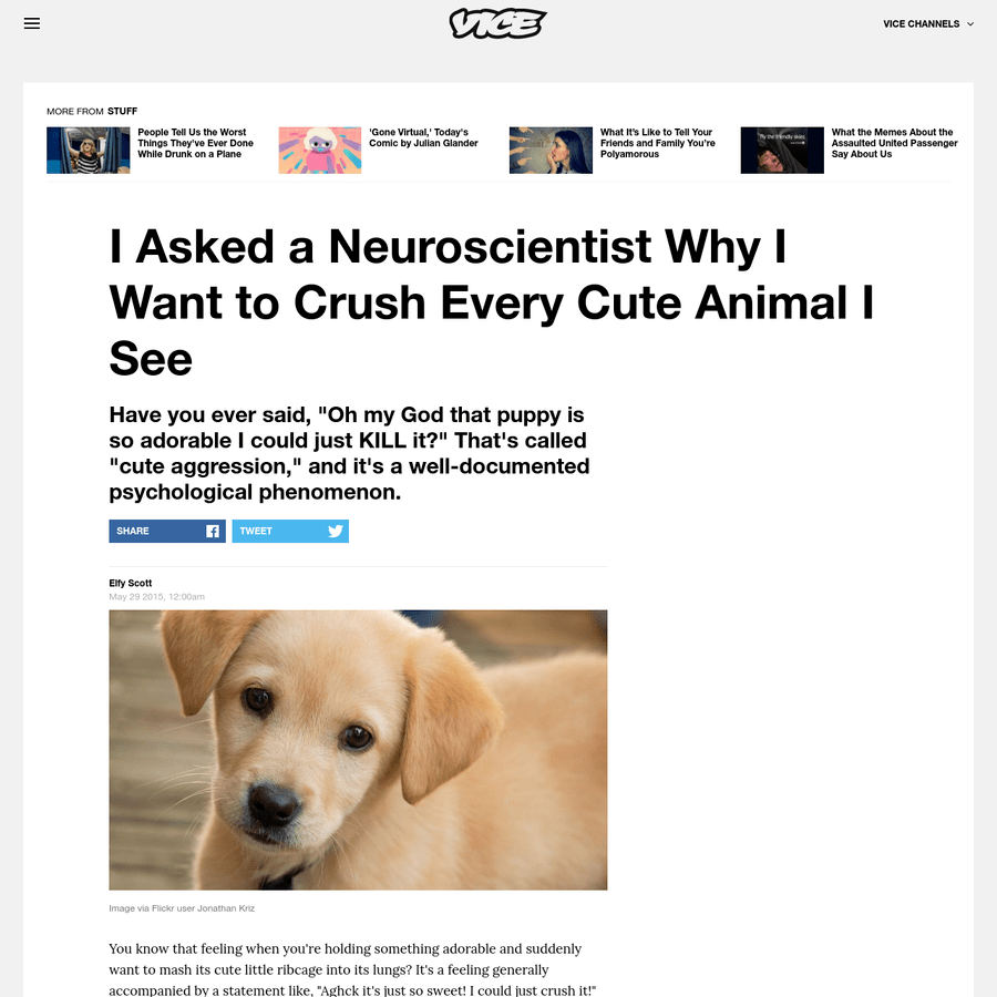 Animal Crush Are Na I Asked A Neuroscientist Why I Want To Crush Every Cute