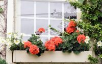 32 Stunning Flower Box Ideas & Arrangements