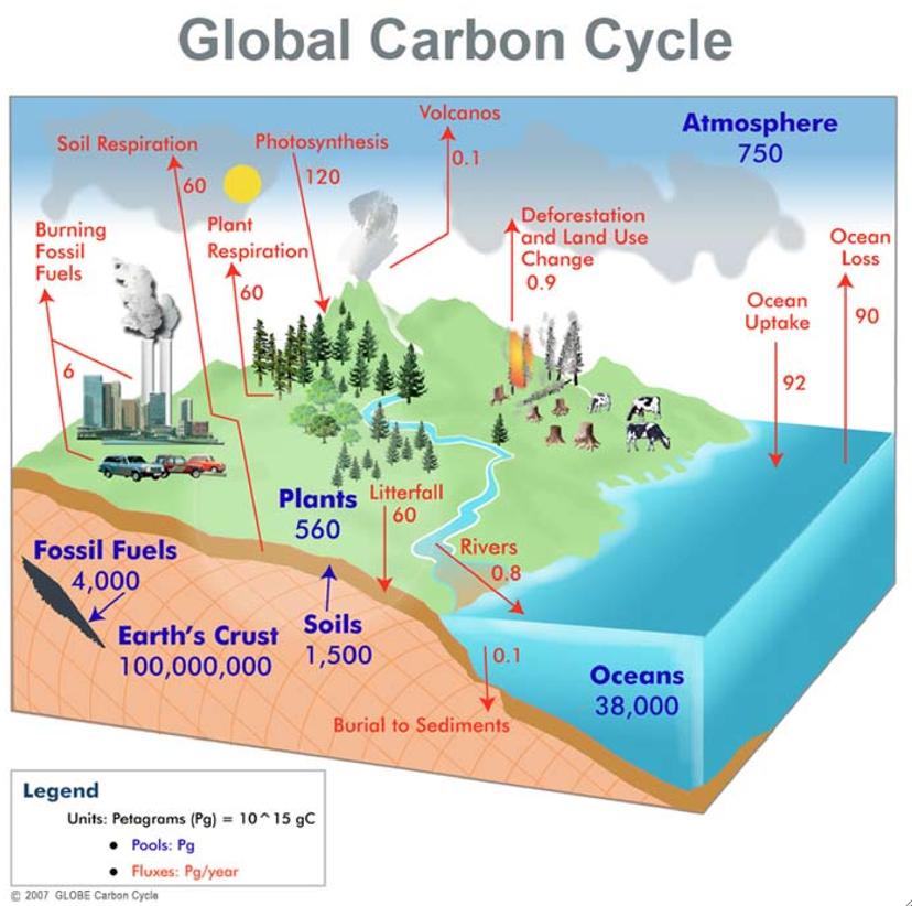 Carbon Cycle Labeling Diagram - Wiring Diagram Schematics \u2022