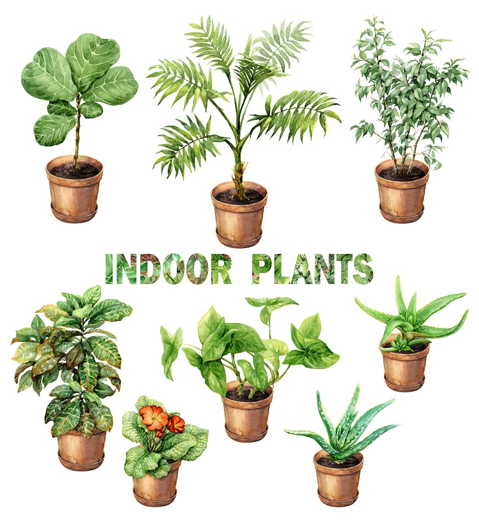 Indoor Plants Hirt S Boxed Botany 12 Month House Plant Subscription