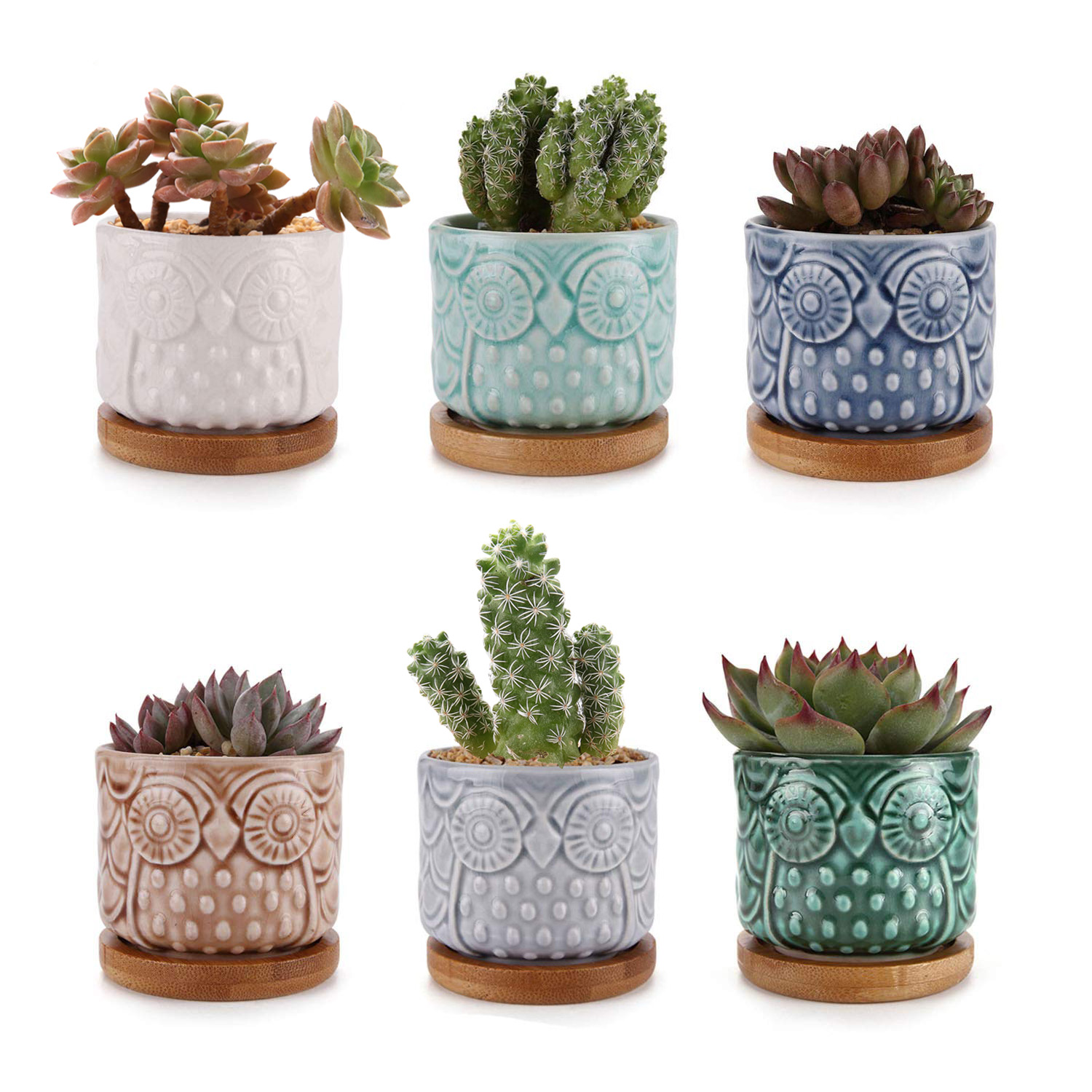 Plante En Pot Details About T4u 2 6 Inch Ceramic Owl Succulent Cactus Planter Pot Set With Bamboo Tray Full