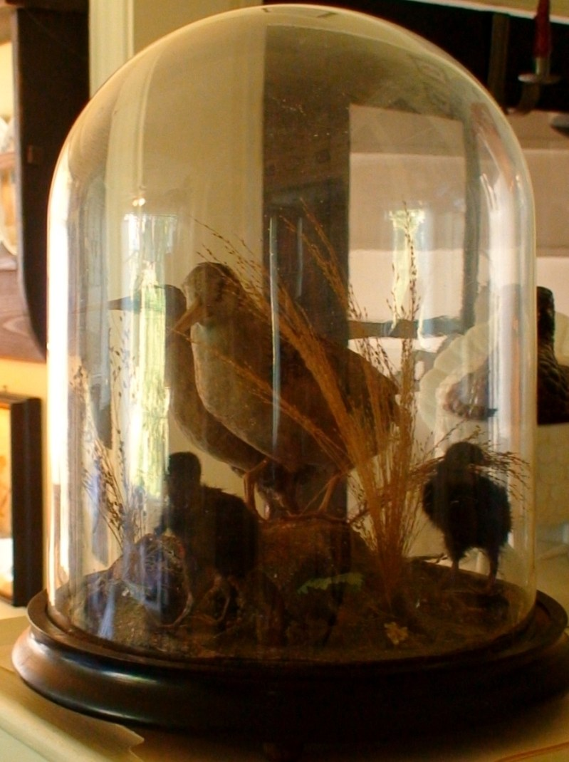Large Of Glass Dome Display