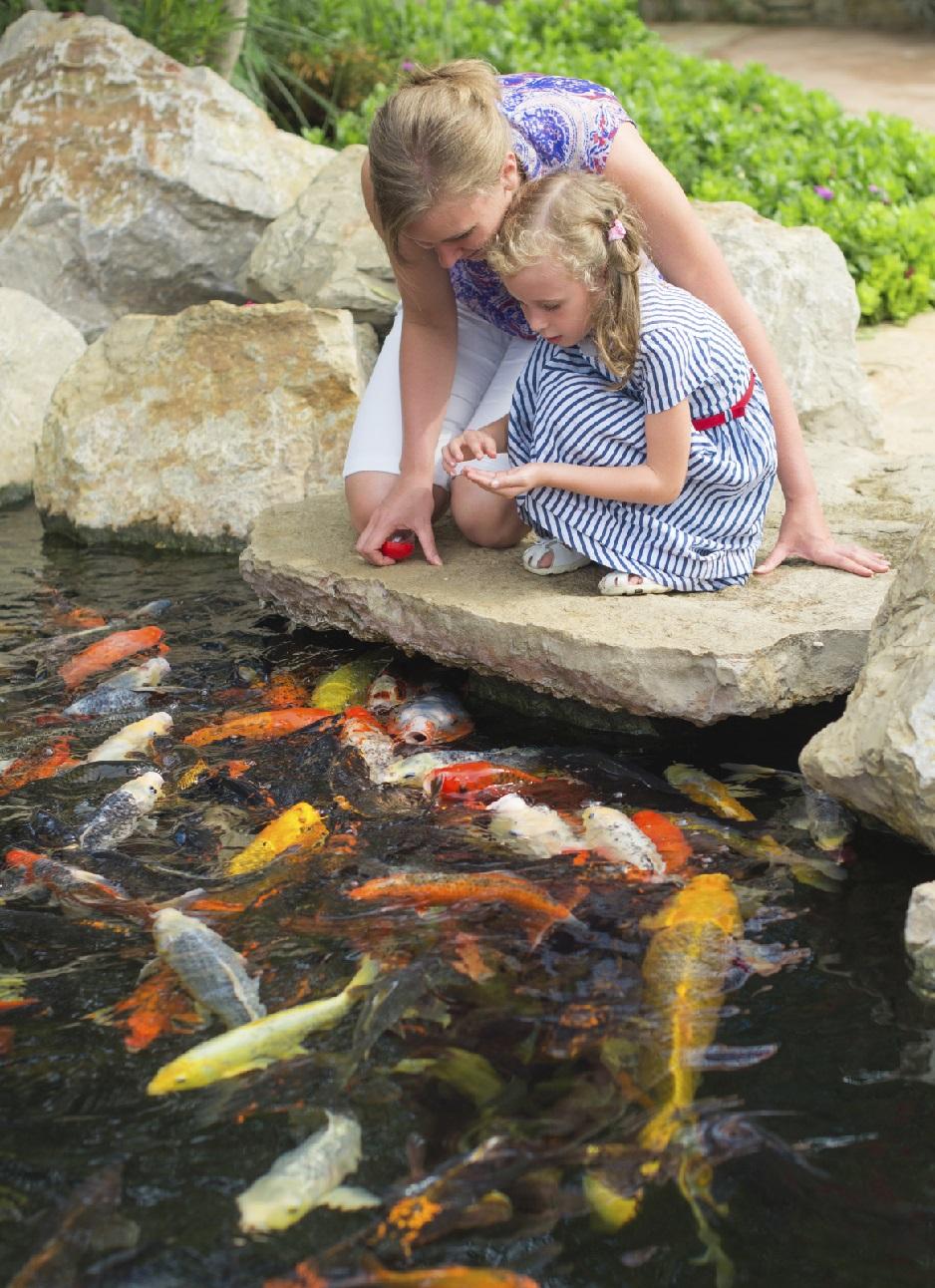 Water Gardens & Backyard Ponds Archives