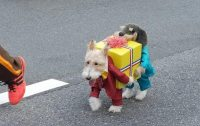 Best Dog Costume Ever - Dogs Carry Gift Box