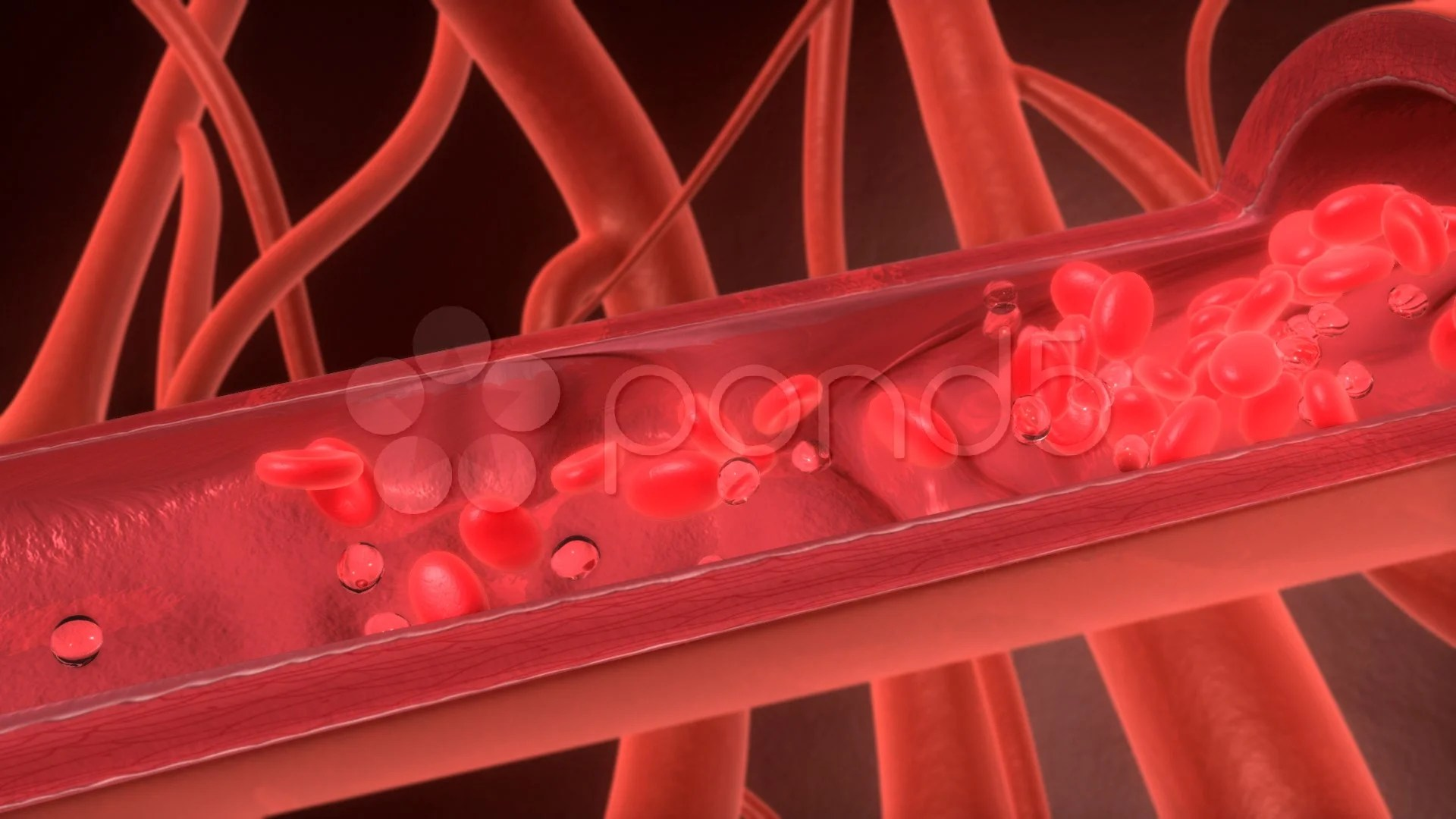 Animated 3d Wallpaper Gifs Looping 3d Red Cell Flowing In Blood Vessel Hd Footage 000651708