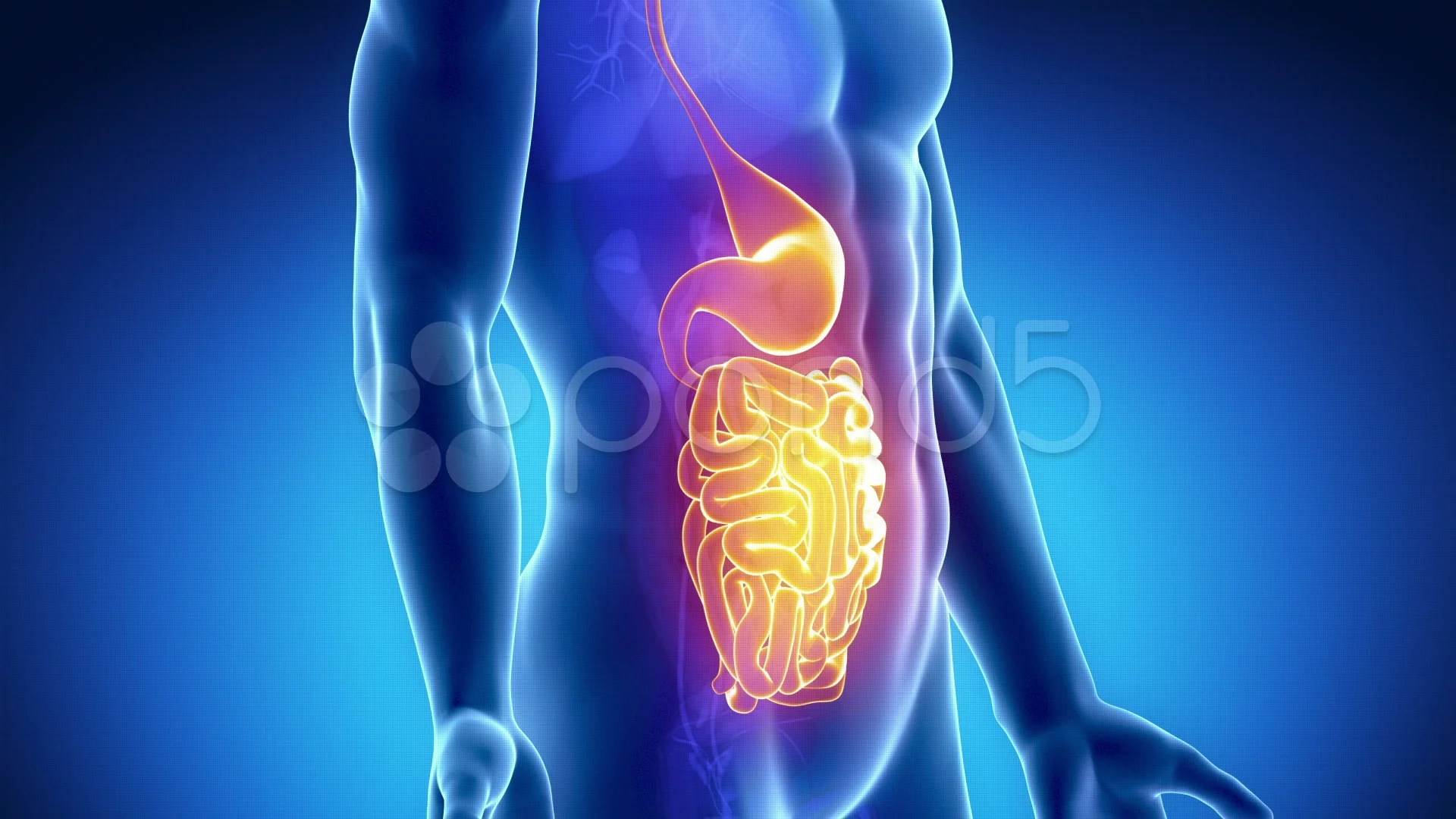 3d Virus Wallpaper Anatomy Of Human Digestive System Gust And Stomach Stock