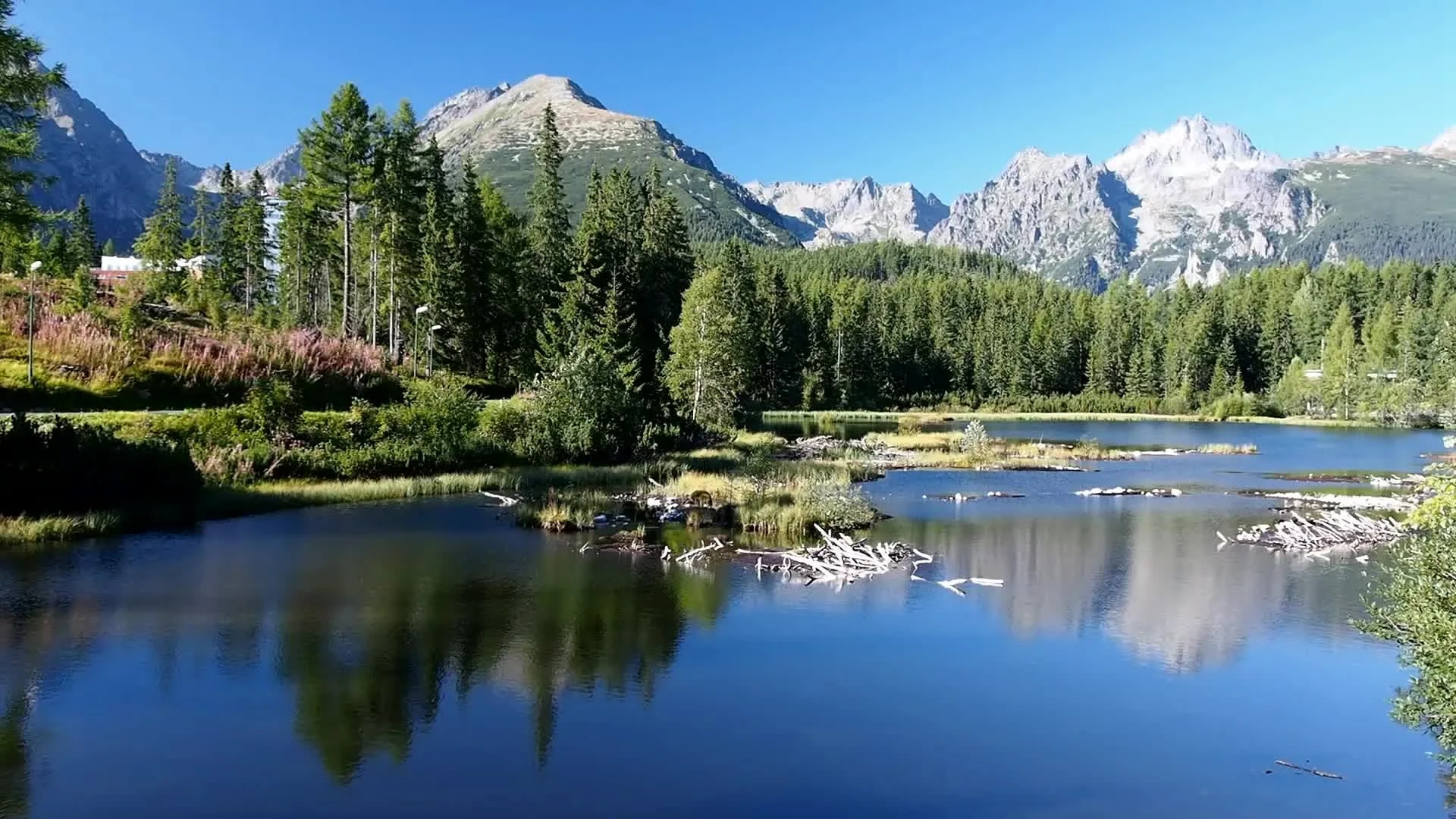 Hd Horse Wallpaper Download Strbske Pleso In Slovak High Tatras At Summer Stock Video