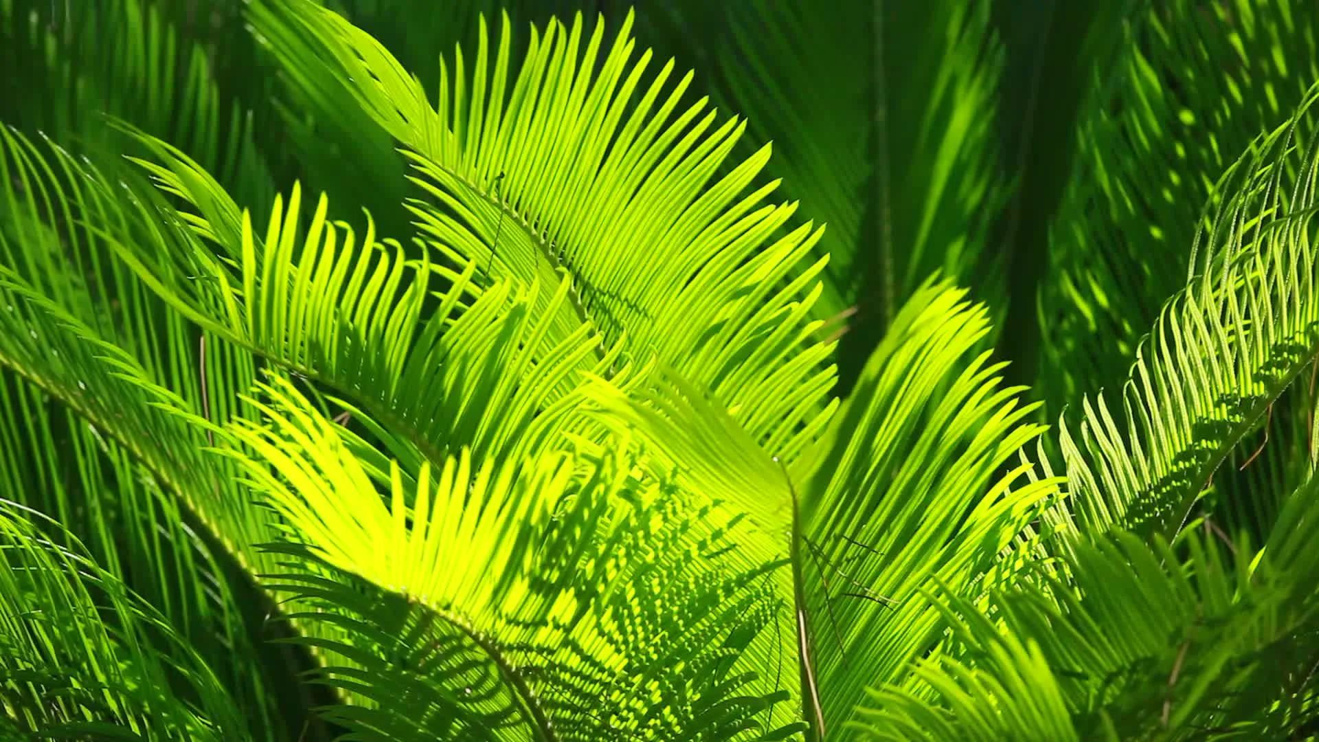Green and bright palm leaves on blured background video