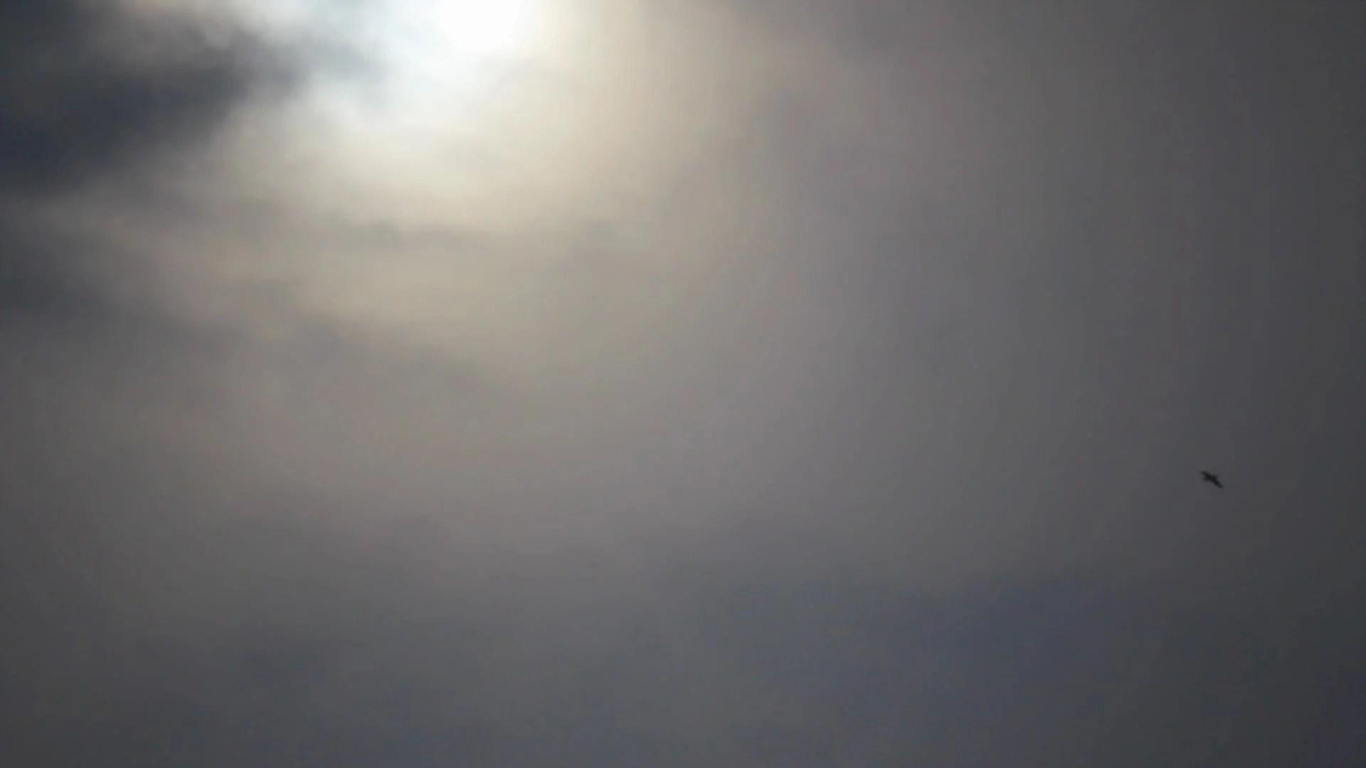 Custom Anime Wallpaper Birds Silhouette On Sunlight On The Background Grey Misty