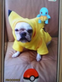 Pokemon Dog Costume
