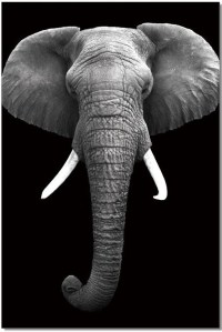 Black and White Elephant Wall Art from JNM | Coleman Furniture