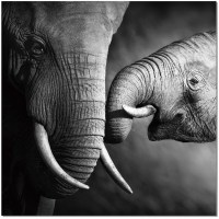Black and White Mama Elephant Wall Art from JNM | Coleman ...