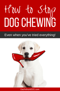 How to Stop a Dog Chewing | Stop dog from chewing in 3 ...
