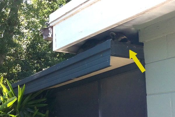 dad blog - A raccoon got into my attic and ruined it.