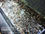 Beekeeping: Are Top Feeders Death Traps?