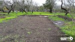 My New Garden Blog
