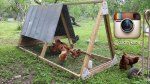 Chicken Tractor Instagram Moments