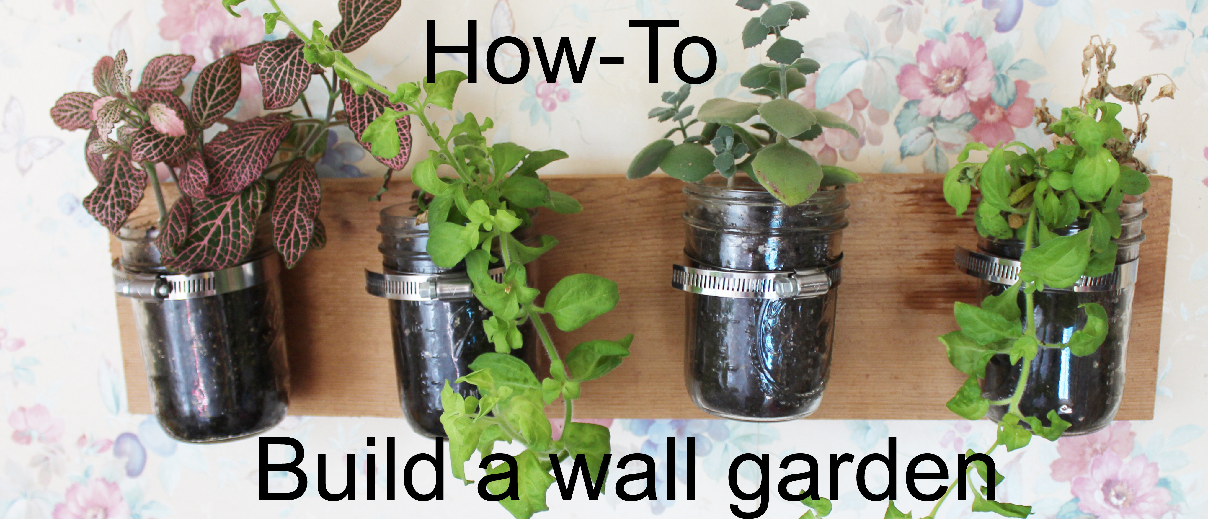 How To Build an Indoor Wall Garden Dads Dealscom