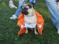 20 Crazy Dog Costumes You Would Love To Put On Your Pooch