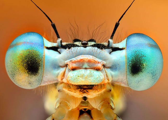 How Beautiful Are Our Top 10 Macro Insect Eyes Shots