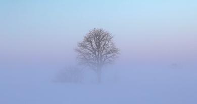 fog-01
