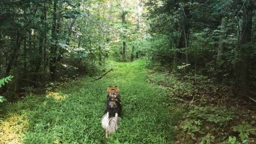 "Sam's dog "" "" in the woods near his home in Churchville, VA, July, 2015. (Sam Morgan)"