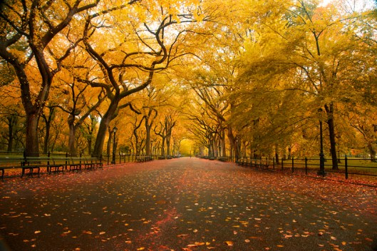 New York City Fall