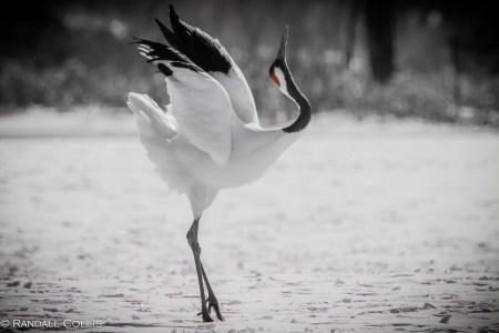 White Crane Spirituality