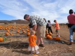 Looking for a pumpkin with Daddy.