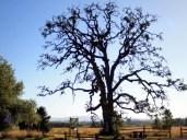 Tree at Ankeny Wildlife Refuge