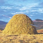 Climate: OJ and the Haystack