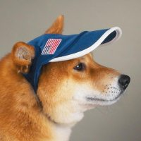 Dogs with hats | A Freath of Bresh Air
