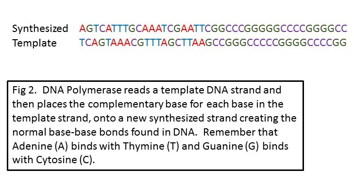 Modern Template Dna Strand Pattern - Example Resume Ideas ...