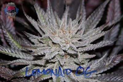 LemonAid.OG