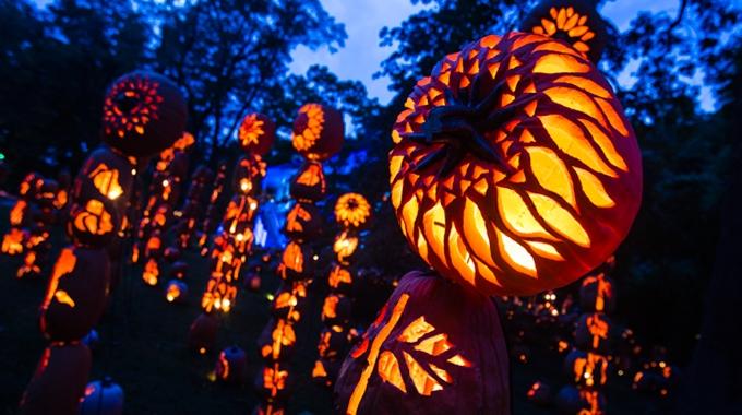 Jack-O-Lantern-Flower