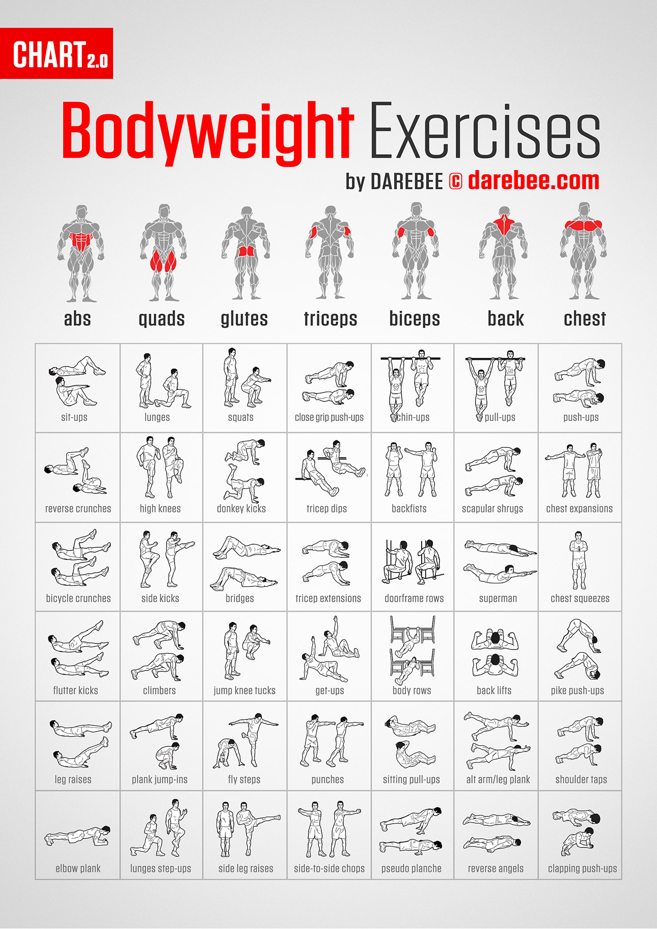 Gym Workout Chart For Chest For Men Muscle Map
