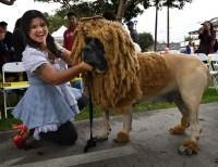 US-HALLOWEEN-ANIMAL-PETS