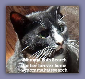 #mommakatsearch SHARE NOW!