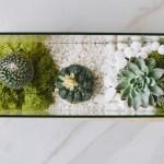 DIY Terrarium Tutorial Video