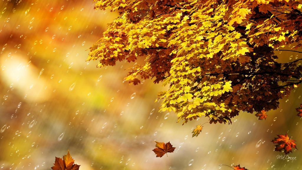 3d Falling Leaves Animated Wallpaper Fall Rain Shower Hd Desktop Wallpaper Widescreen High