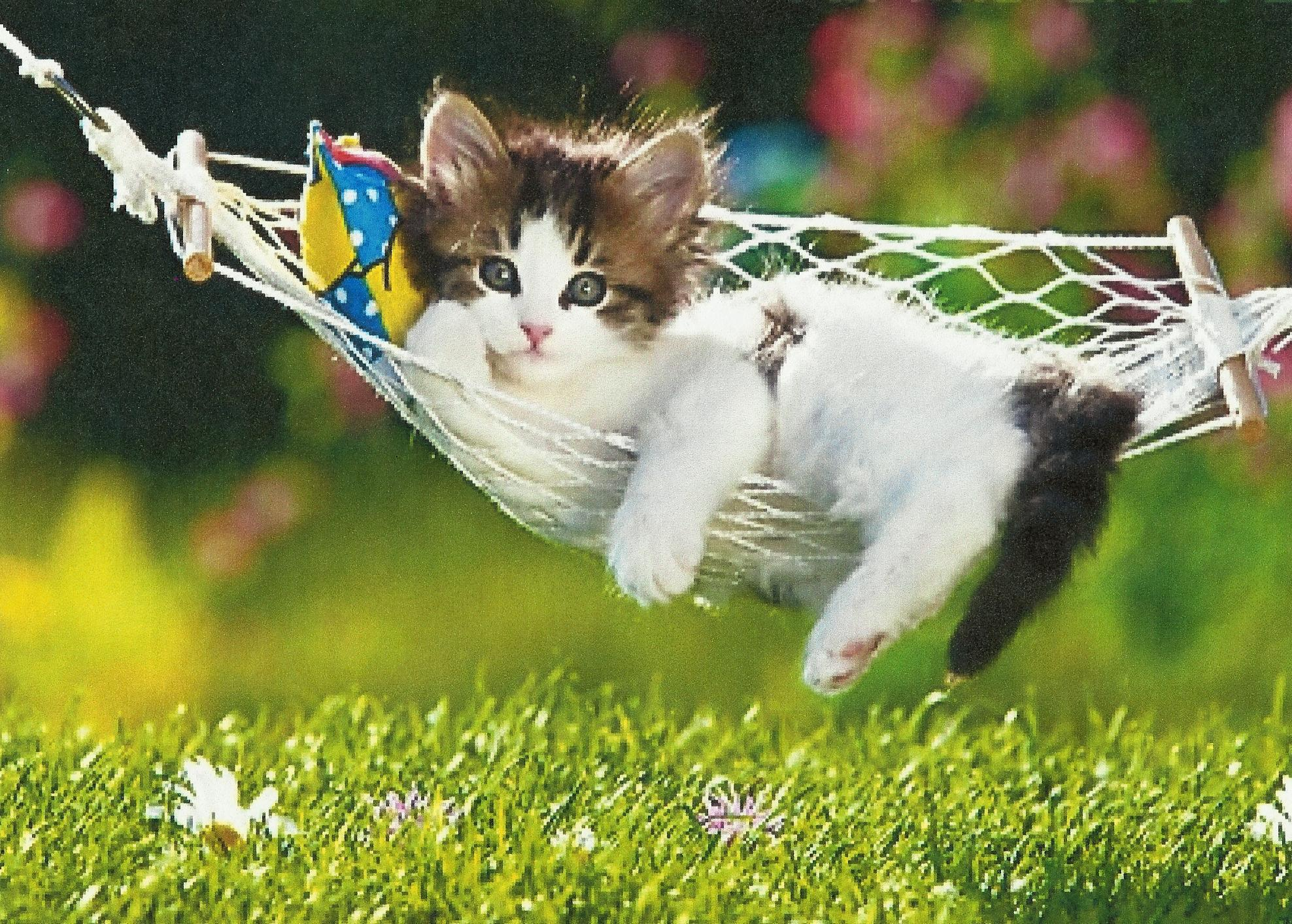 Cute Baby Attitude Wallpaper A Kitten Hd Desktop Wallpaper Widescreen High